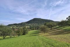 Blick durch Obstwiesen zum Grußenberg beim Aufstieg zur Eninger Weide