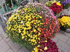 Angebote im Blumenladen der Insel
