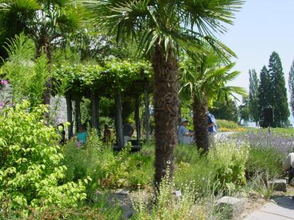 Palmen auf Mainau (Foto Stako, bearbeitet durch Tuxyso | http://commons.wikimedia.org | Lizenz: CC BY-SA 3.0 DE)