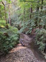 Kleine Bäche durchziehen den Wald