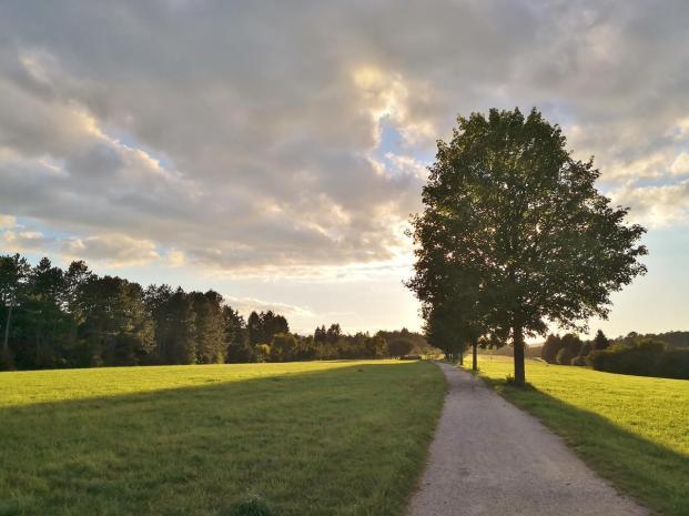 Wanderweg auf dem Hochplateu des Honbergs im Licht der untergehenden Sonne
