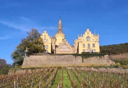 Blick durch die Weinberge hinauf zum Schloss Arenfels