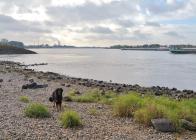 Doxi will in den Rhein