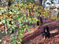 Die Blätterfarben des Herbstes