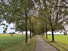 Private Allee an der Zufahrt zum Gut Neuenlohoff bei Homberg