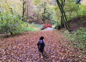 Der Waldboden am Hammersbach ist bereits mit Blättern übersäht