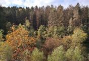 Waldflächen an der Sengbachtalsperre