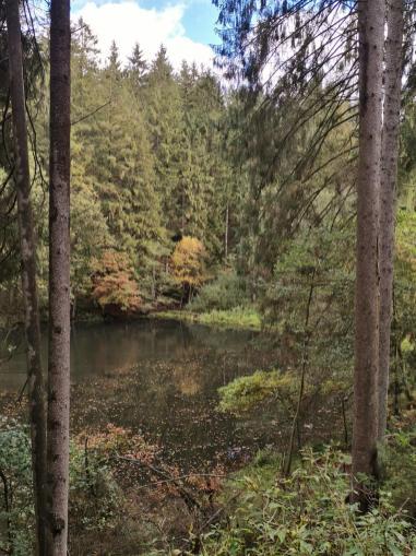 Am Zufluss des Sengbachs zur Talsperre