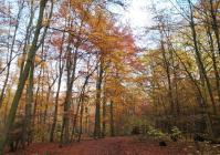 Schöner bunter Herbstwald