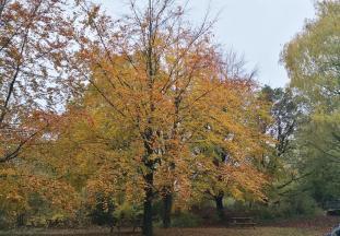 Hersbtlich bunte Bäume auf dem Gelände von Yoga Vidya