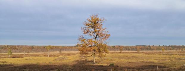 Panoramabild aus dem Elmpter Schwalmbruch
