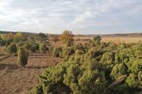 Westlicher Teil der Heidefläche