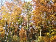 Farbenprächtiger Einstieg in den Diergardtschen Wald