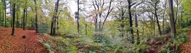 Panoramabild aus dem Wald oberhalb von Schloss Landsberg