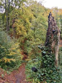 Abstieg durch den Wald zum Schloss Landsberg