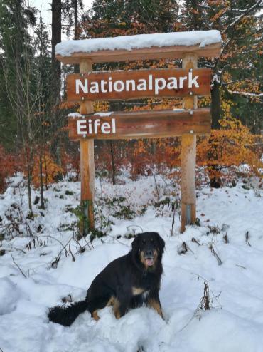 Wir laufen statt dessen auf deutscher Seite in den Nationalpark Eifel hinein.