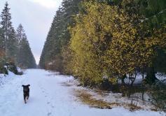 In den frostigen Nächten jetzt werfen die Laubbäume massenhaft ihre Blätter ab.