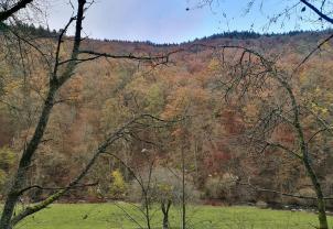 Bunter Herbstwald in den Hängen oberhalb der Rur