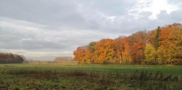 Panoramabild vom Waldrand