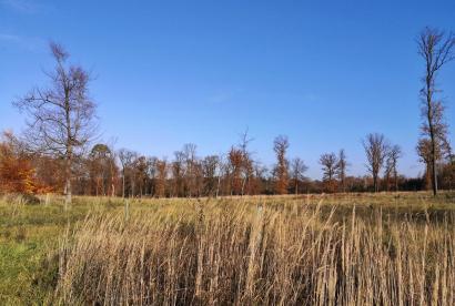 Heidefläche im Oberbusch