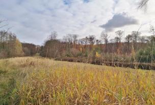 Landschaft am Junkernbusch Graben