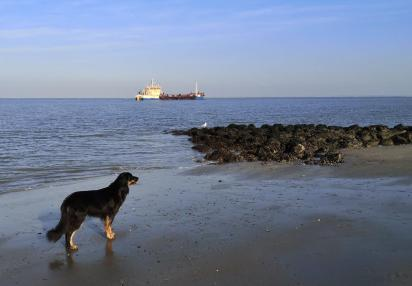 Eines der Schiffe, die Sand vom Meeresgrund aufnehmen, um ihn an den Strand zu bringen