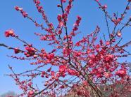 Hübsche Blüte am Blankpfad bei Schlich
