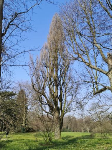 Alter Baumbestand im Schlosspark