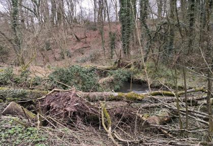 Die zahlreichen Stürme der letzten Zeit haben an der Düssel ihre Spuren hinterlassen