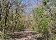 Auf dem Eselspfad am Rande des Jostenbusches