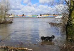 Auf dem Rhein herrscht trotz des Hochwassers reger Schiffsverkehr