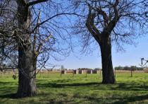 Blick durch die Kastanienallee auf das Dycker Feld
