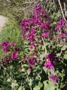 Hübsche Wildblumen am Wegesrand