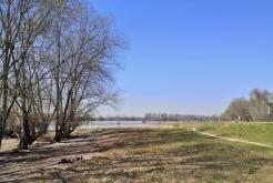 Am Rhein gegenüber von Zons