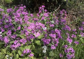 Hübscher kleiner Falter auf Wildblumen bei Unterwestrich