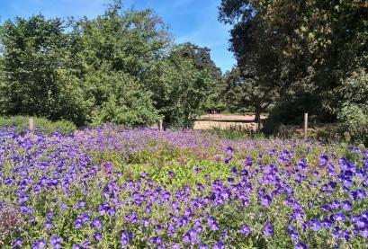 Wildblumenbeet im Park