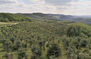 Hier wachsen schon die Tannenbäume für die nächsten Weihnachtsfeste heran