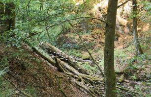 Schon lange liegt dieser umgestürzte Baum im Bachbett. Die Wuchsrichtung der Pilze in seiner Rinde beweist es.