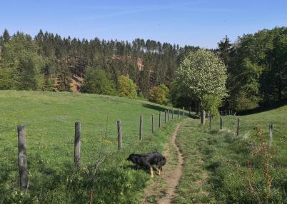 Beim Abstieg ins Tal des Bosselbachs. Doxi nascht am frischen Gras.