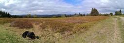Panoramabild vom Naturschutzgebiet auf dem Gipfel