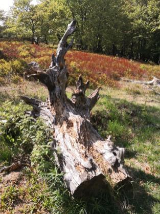 Totholz im Naturschutzgebiet