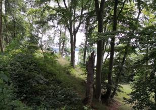 Wir steigen durch den Wald zum Uferpfad hinab