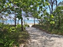 Blick durch die mit Kiefern bewachsenen Dünen zum Strand