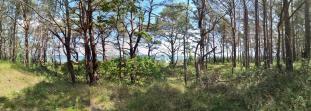 Panoramabild von der Dünenlandschaft zwischen Prora und dem Strand