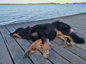 Doxi macht Pause auf dem Steg