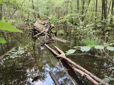 Versunkene Wege in einem früheren historischen Park am Seeufer