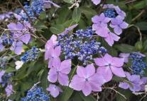 Wunderschöne Blumen an einem Haus am Waldrand