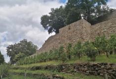 Weinstöcke vor der südlichen Stadtmauer von Blankenberg
