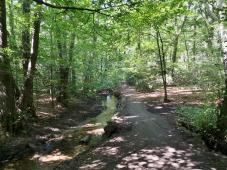 Im Wald zwischen Langenfeld und Leichlingen