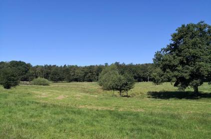 Offene Flächen und Wald wechseln sich auf dieser Tour ab
